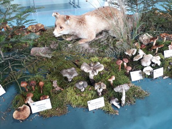 4. Große Pilzausstellung des Schwäbischen Waldes - Naturparkführer Schwäbisch-Fränkischer Wald e.V.