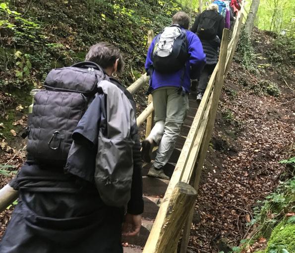 Durch die herbstlichen Wälder um Wüstenrot - Naturparkführer Schwäbisch-Fränkischer Wald e.V.