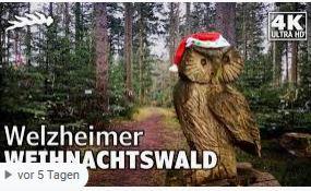 Weihnachtswald auf Youtube - Naturparkführer Schwäbisch-Fränkischer Wald e.V.